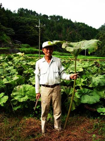 北海道のラワンから種をもらい植えたらそこから芽をふいたそうです